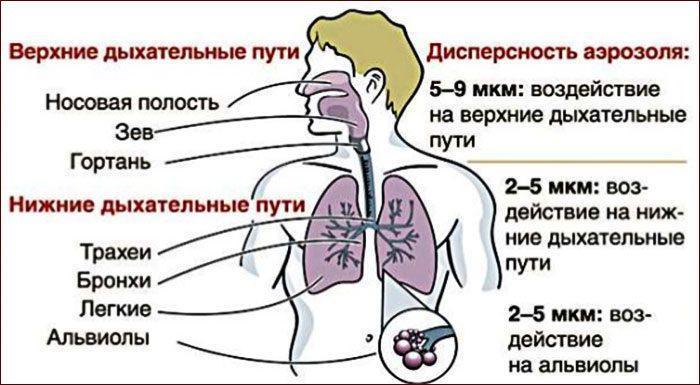 Применение небулайзера для лечения дыхательной системы