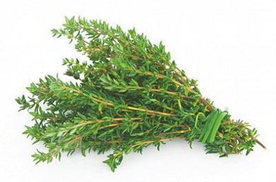 Трава тимьян