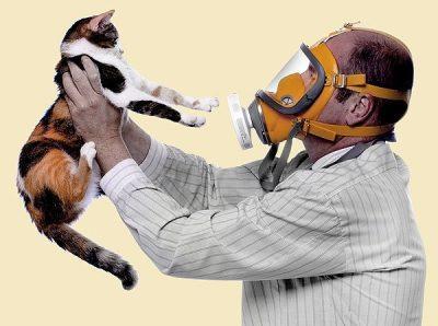 Отказ от кошек