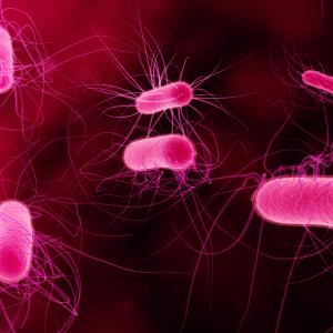 Останавливает размножение бактерий;