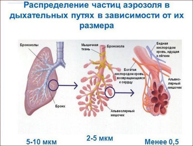 Распределение частиц лекарств в бронхолегочной системе