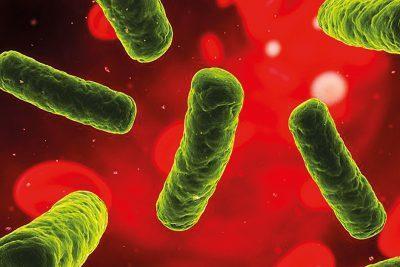 Способствует уничтожению вредных микроорганизмов