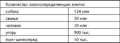 Количество запахоопределяющих клеток