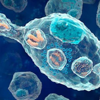 Миграция клеток иммунной системы в очаг воспаления