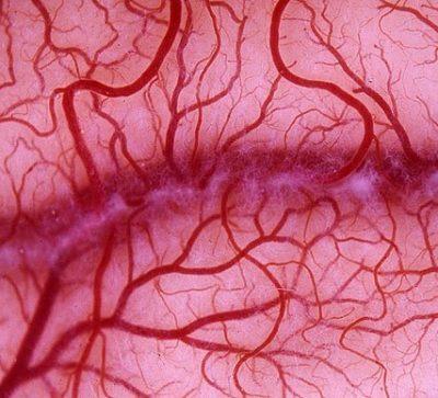 Мелкие кровеносные сосуды