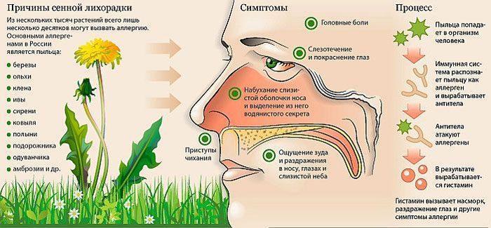 Причины и симптомы поллиноза