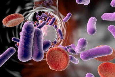 Бактерии в крови