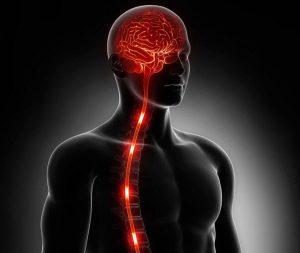 импульсы от головного мозга