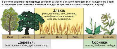 Период цветения растений