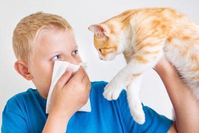Аллергия на шерсть животного