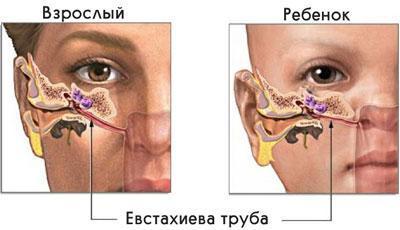 Расположение евстахиевой трубы
