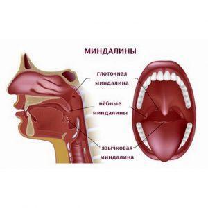 Глоточные миндалины