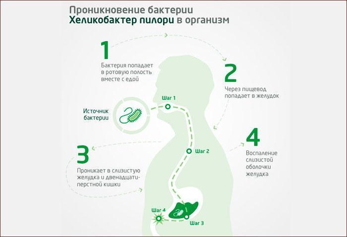 Проникновение бактерии хеликобактер в организм