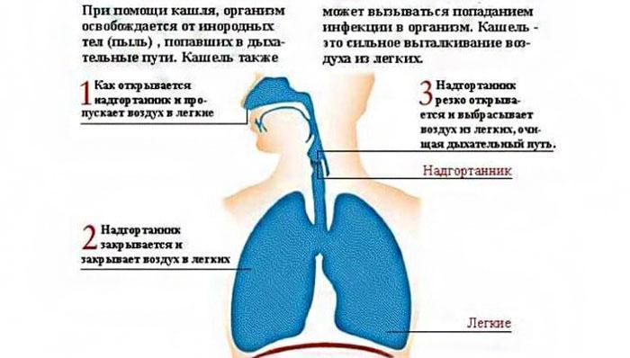Для чего нужен кашель