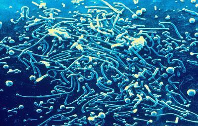 Бактерии Mycoplasma pneumoniae