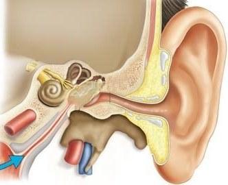 Полость среднего уха