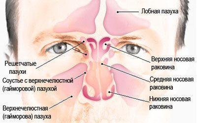 Виды пазух носа