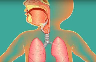 Строение дыхательной системы грудничка
