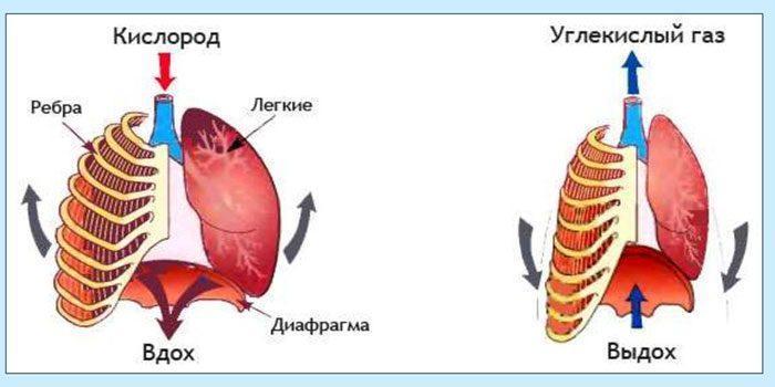 Прорцесс дыхания