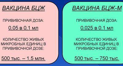 Отличия бцж и бцж м