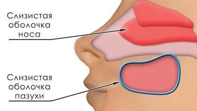 Слизистые носа