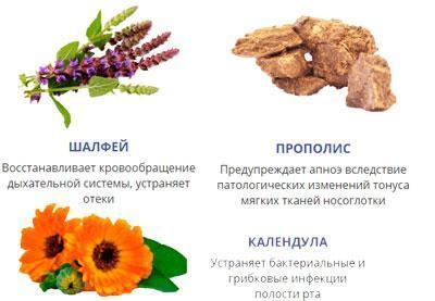 Компоненты препарата снорекс