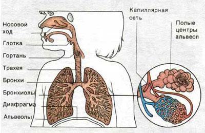 Заболевание трахеит