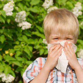 Как вылечить аллергический ринит по методу доктора Комаровского